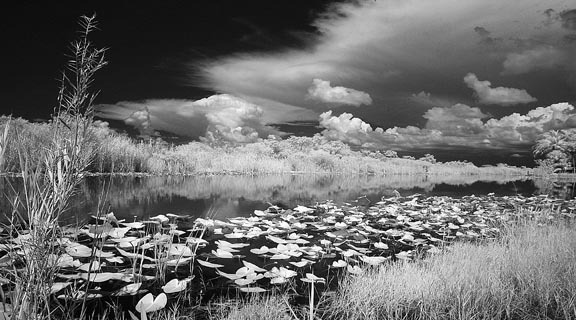 Florida Everglades infrared photo river of grass by Gary Sweetman