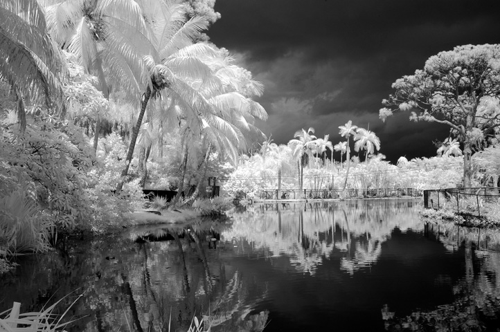 Tropical florida b&w summer skies, clouds, Naples Zoo, Summer thunderstrom over everglades