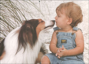 dog licking baby's face beach portrait of children and dog