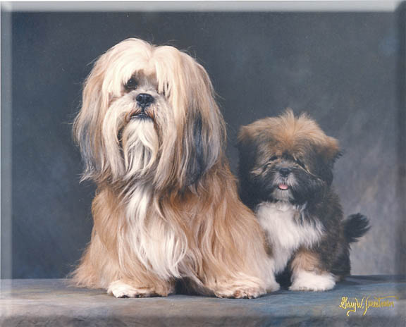 Puppy and Dog portrait